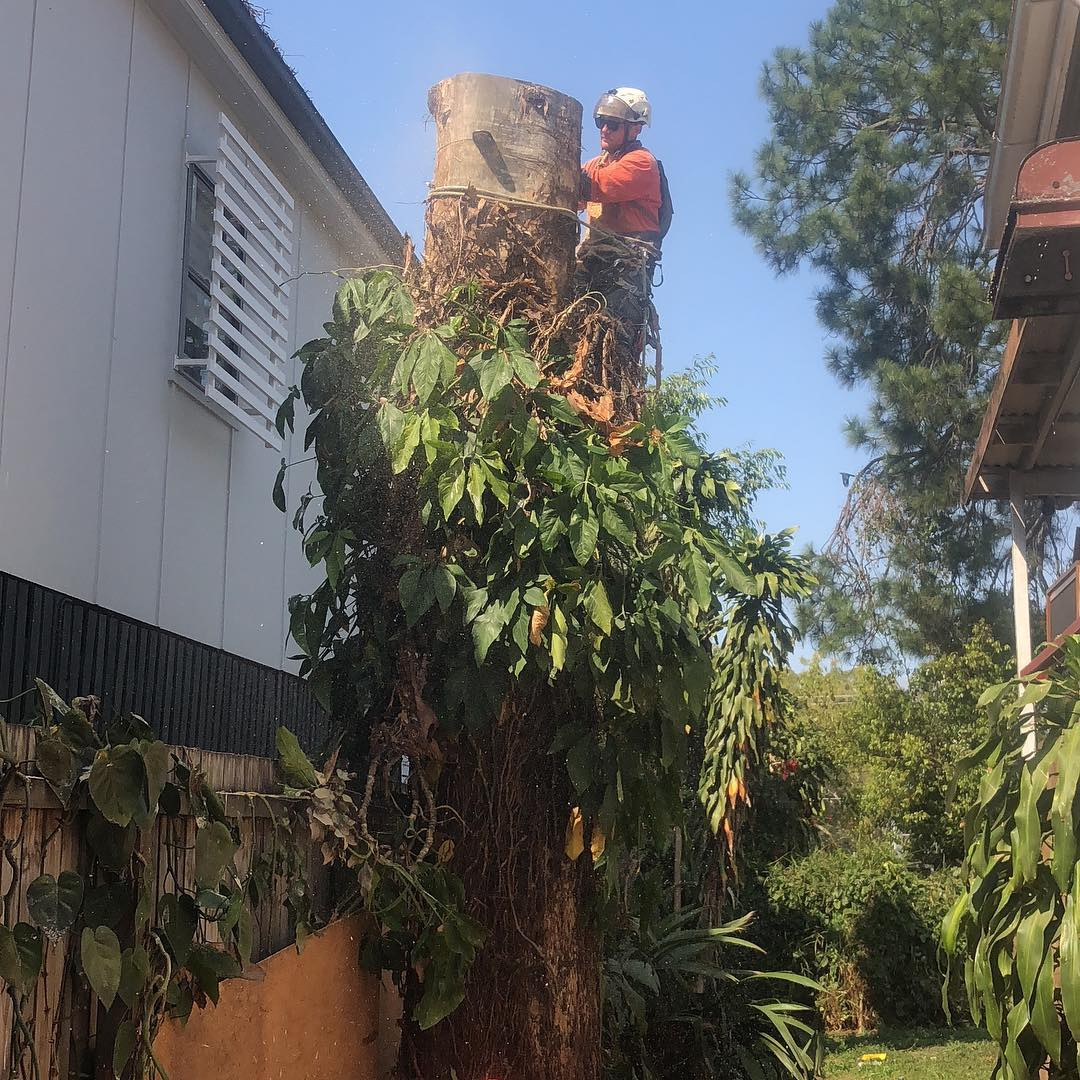 Government Tree Pruning