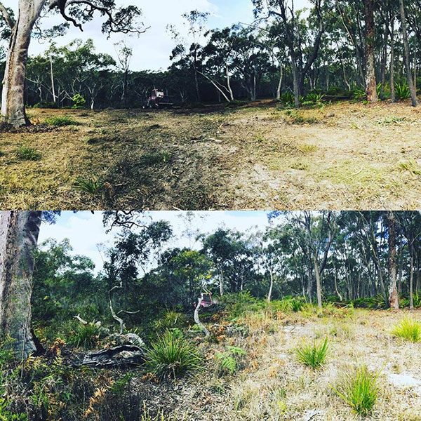 Advanced-Clearing-Excavation-after-before-land-clearing-Sydney