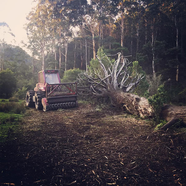 Advanced-Land-Clearing-Bobcat-with-Felled-Tree-Sydney