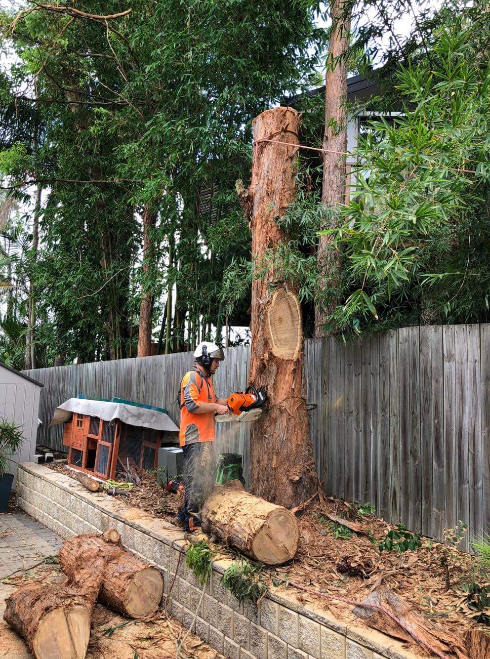 Arborspec - Arborist and Tree Cutting Services - Brisbane