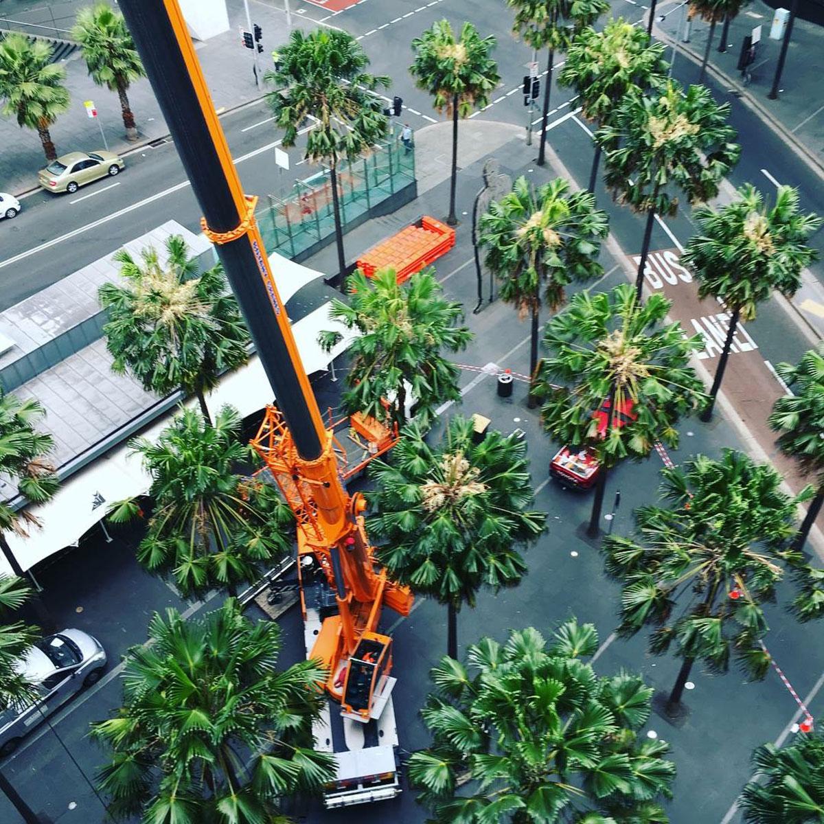 Botany Cranes Crane Ariel Shot