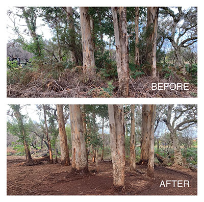 Eco-Land-Clearing-Before-and-After-Clearing-1-Margaret-River