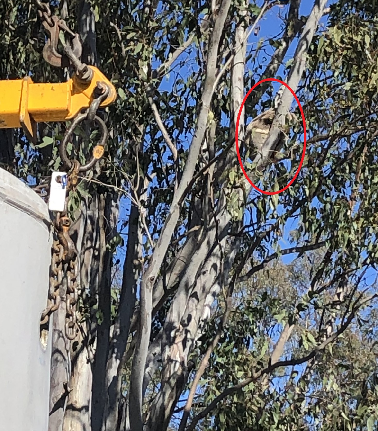 Koala supervises installation of HSTP