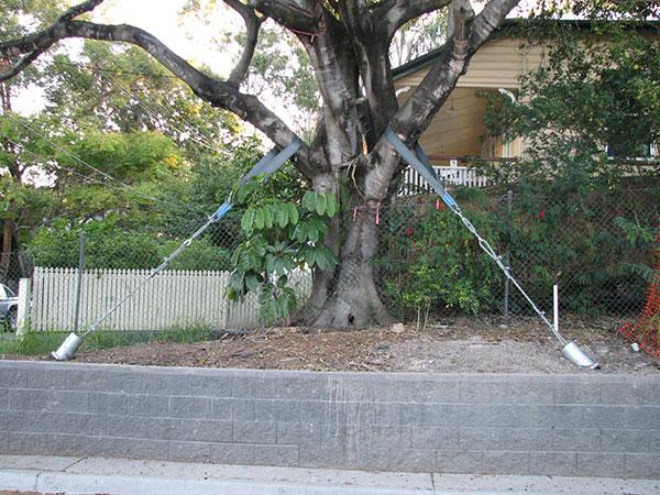 TEAM Rock Anchors Tree-Stabilisation Queensland