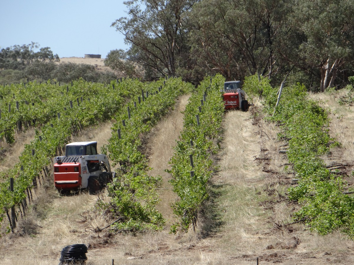 Vine Sight Vineyard consruction bobcats