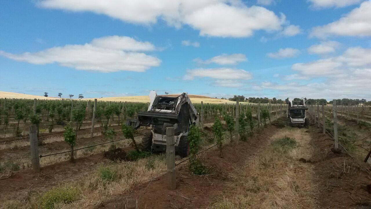 Vine Sight bobcats on vineyard