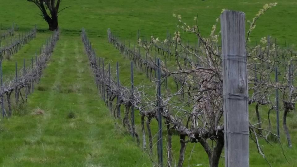 Vine Sight vineyard range