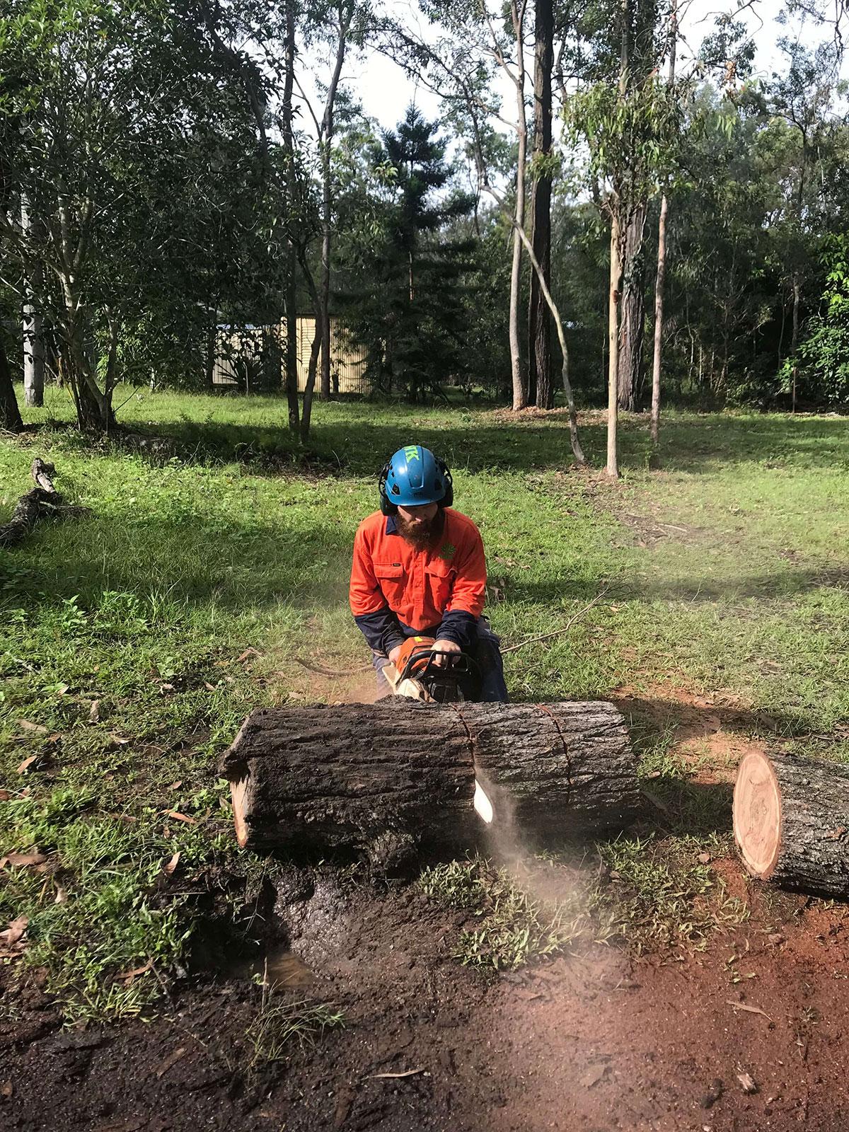 Certified Arborists Brisbane