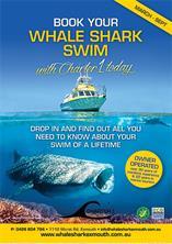 Wale Shark Swim poster